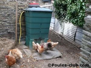 Récupérateur d'eau dans l'enclos de nos poules