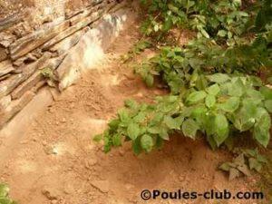 Les fameux nids de poules