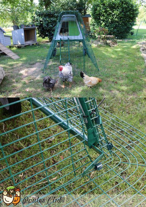 Comment prot ger les poules des pr dateurs - Empecher les chats de venir dans le jardin ...