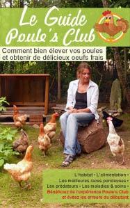 Guide poule's Club