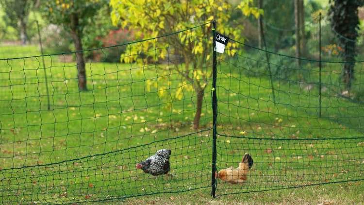 Conseils filet pour poules
