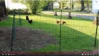 Installer un enclos en filet pour ses poules