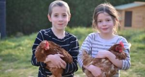 Les enfants adorent les poules !