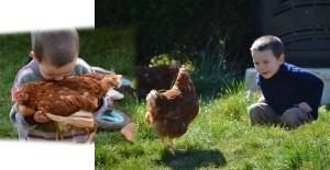 poule-rousse-enfant