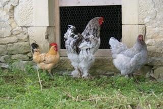 Participants concours Miss poule et Mister Coq