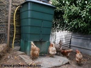 recuperateur-eau-poules