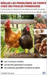 Régler les problèmes de ponte chez ses poules pondeuses - Disponible en version téléchargeable et version papier