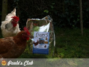 crispys-poules