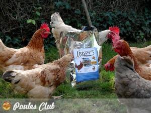 De bons insectes séchés pour nos poules