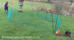 Un filet pour agrandir l'espace de ses poules