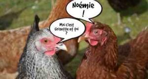 noemie-et-grisette