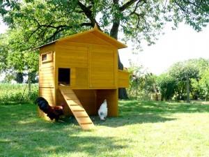 grand poulailler pour 10 12 poules. Black Bedroom Furniture Sets. Home Design Ideas