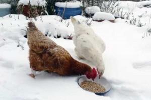 patee-chaude-hiver