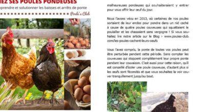 Livre Isabelle Goriaux Régler les problèmes de ponte chez ses poules pondeuses