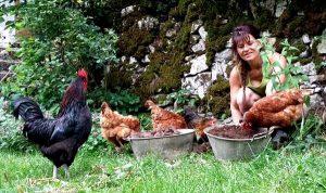 Les poules de Coralie