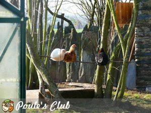 Nos poulettes perchées