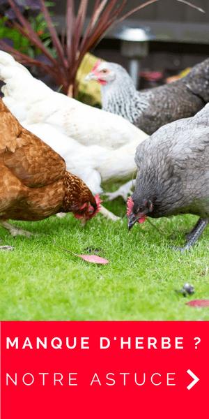 Découvrez le filet pour offrir plus d'herbe à vos poules