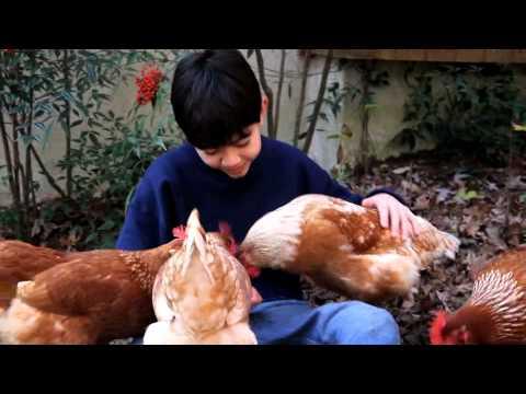 Video poules rousses