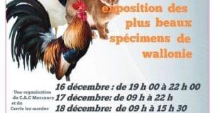 Expositions avicoles Belgique 2017