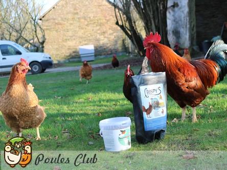 Des insectes et des vers séchés pour nos poules