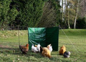 Bâche filet poules