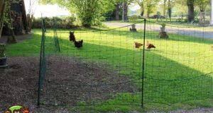 Filet pour agrandir l'enclos de nos poules