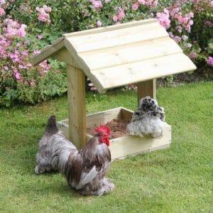Coin abrité pour le bain des poules
