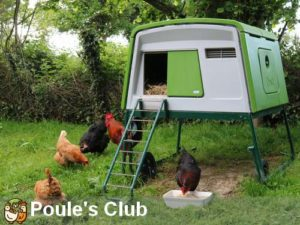 Toujours de l'herbe pour vos poules grâce au filet et au poulailler mobile