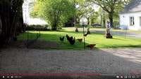 Le filet à poules Omlet en démo vidéo