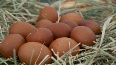 Conseils pour l'achat d'œufs fécondés