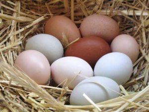 Des œufs de toutes les couleurs