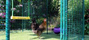 Et si vos poules pouvaient se balancer ?