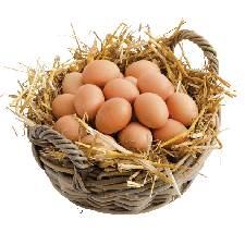 Obtenir de bons œufs en élevant ses poules