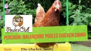 Balançoire/perchoir pour poules