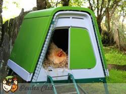 Super poulailler en plastique ideal pour 4 poules