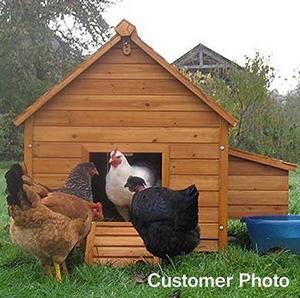 Ce poulailler est idéal pour 4 grandes poules