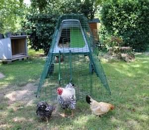 Poulailler 2-3 poules très sécurisé