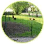 Utiliser le filet à poules pour un enclos permanent