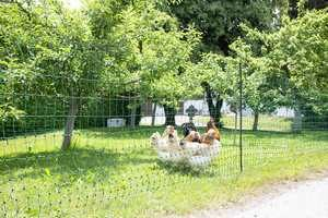 Un filet pour créer un enclos rapidement pour ses poules