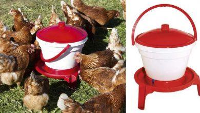 Abreuvoir sur pieds pour ses poules