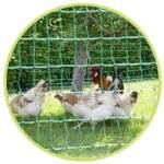 Le filet à poules