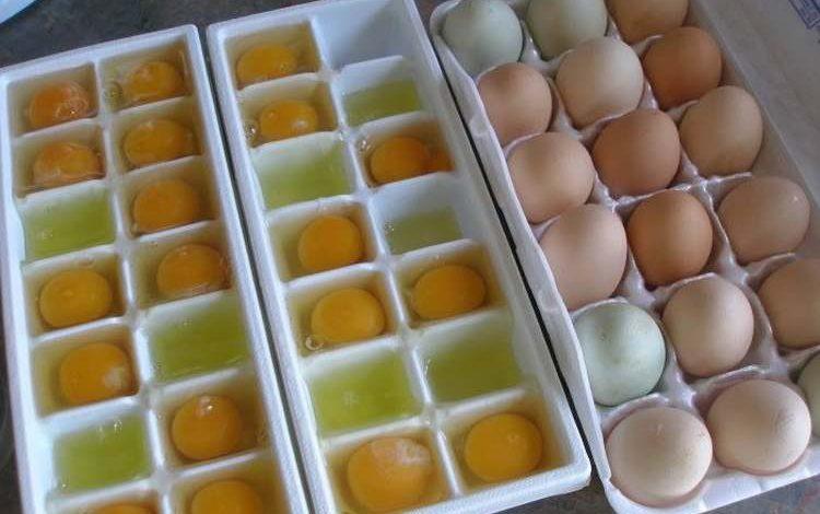 Pour tout savoir sur le stockage et la conservation des œufs