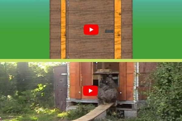 Deux vidéos pour vous aider à construire un poulailler en caisse palette