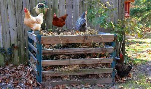 Un coin compost pour attirer vos poules