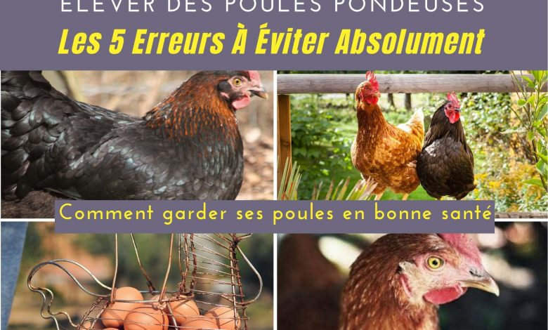 Un guide gratuit en pdf pour élever vos poules sans erreurs