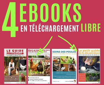 4 Ebooks sur les poules en téléchargement libre
