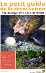 Comment faire découver une poule pondeuse ?