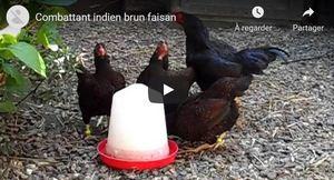 Voir la combattant indien en vidéo