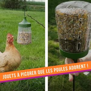 Les poules adorent les jouets à picorer