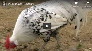 Voir la Hambourg en vidéo